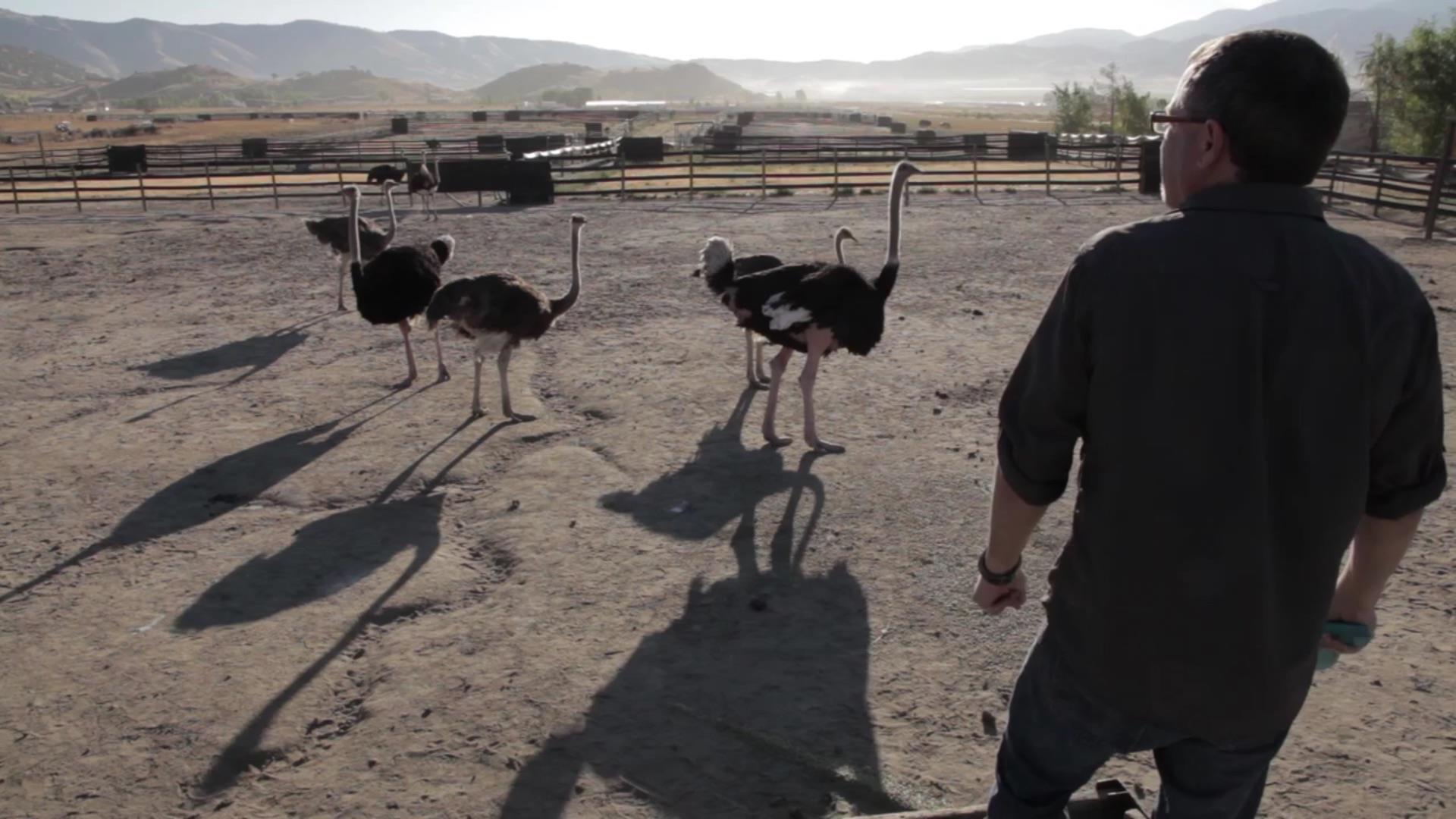 Cooper Tire: Ostrich Ranch